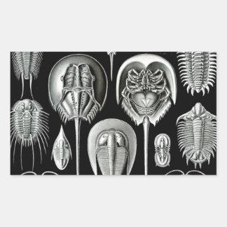 Ernst Haeckel's Aspidonia Rectangular Sticker
