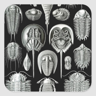 Ernst Haeckel's Aspidonia Square Sticker