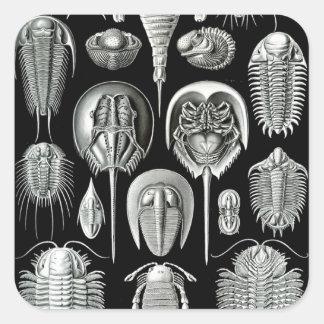 Ernst Haeckel's Aspidonia Square Sticker