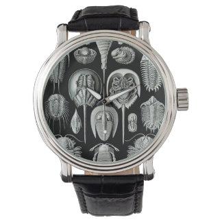 Ernst Haeckel's Aspidonia Watch