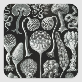 Ernst Haeckel's Mycetozoa Square Sticker