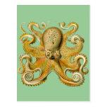Ernst Haeckel's Octopus Postcard