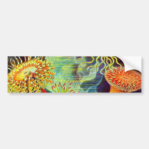 Ernst Haeckel's Sea Anemones Car Bumper Sticker