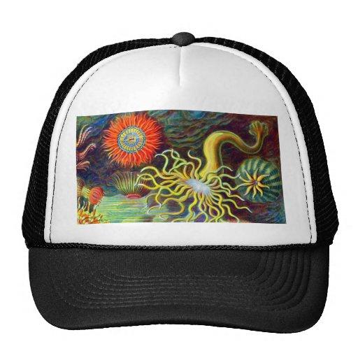 Ernst Haeckel's Sea Anemones Trucker Hat