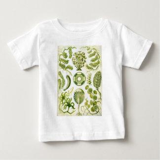 Ernst Haeckel's Siphoneae Seaweed and Algae Baby T-Shirt