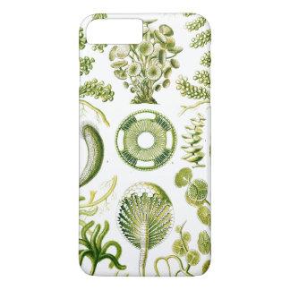 Ernst Haeckel's Siphoneae Seaweed and Algae iPhone 8 Plus/7 Plus Case