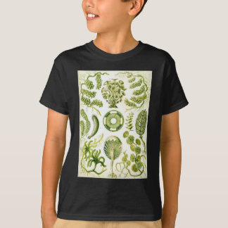 Ernst Haeckel's Siphoneae Seaweed and Algae T-Shirt