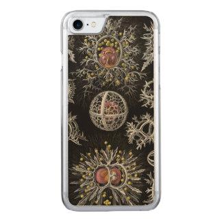 Ernst Haeckel's Stephoidea Carved iPhone 7 Case