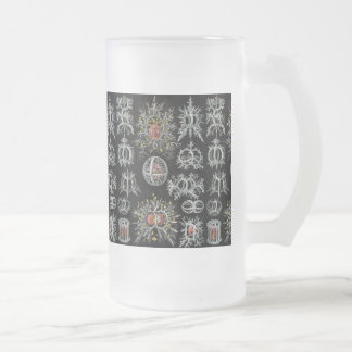 Ernst Haeckel's Stephoidea Frosted Glass Beer Mug