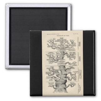 "Ernst Haeckel's ""tree of life"" Refrigerator Magnet"