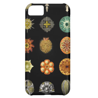 Ernst Haeckel's Undersea Jewels iPhone 5C Covers