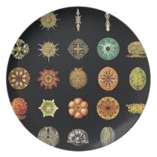 Ernst Haeckel's Undersea Jewels Dinner Plate