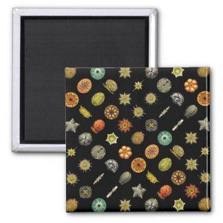 Ernst Haeckel's Undersea Jewels Magnets