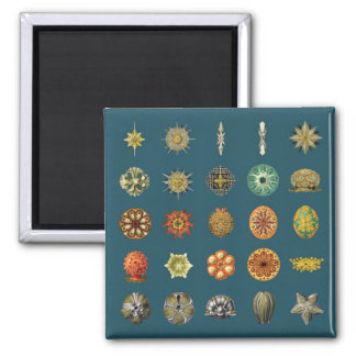 Ernst Haeckel's Undersea Jewels Magnet