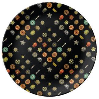 Ernst Haeckel's Undersea Jewels Porcelain Plates