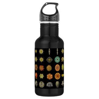 Ernst Haeckel's Undersea Jewels Stainless Steel Water Bottle