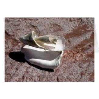 Eroded shell, Los Gatos anchorage Card