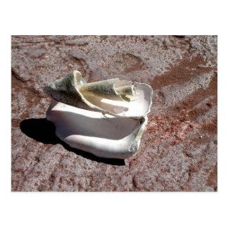 Eroded shell, Los Gatos anchorage Postcard