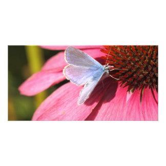 eros blue on pink flower card