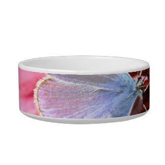 eros blue on pink flower cat food bowls