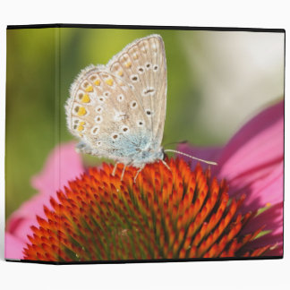 eros blue with closed wings 3 ring binder