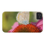 eros blue with closed wings Case-Mate iPhone 4 cases