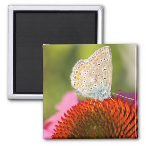 eros blue with closed wings fridge magnet