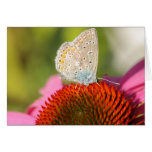eros blue with closed wings greeting cards