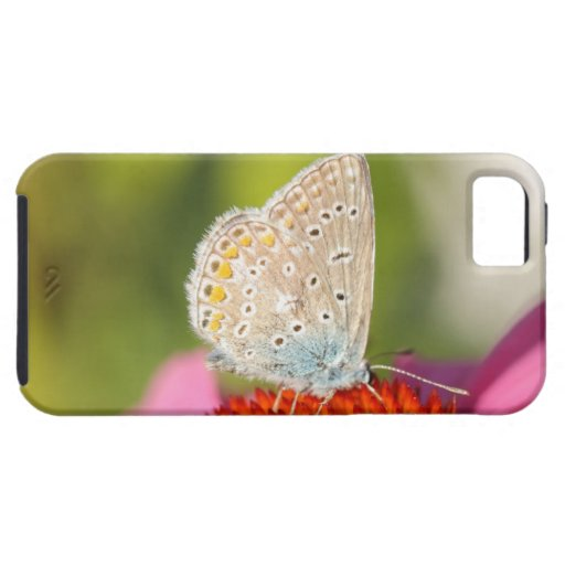 eros blue with closed wings iPhone 5 case