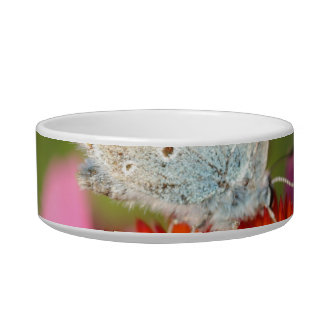 eros blue with closed wings cat water bowls