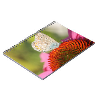 eros blue with closed wings spiral notebook