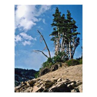 """Erosión que expone raíces del árbol folleto 8.5"""" x 11"""""""