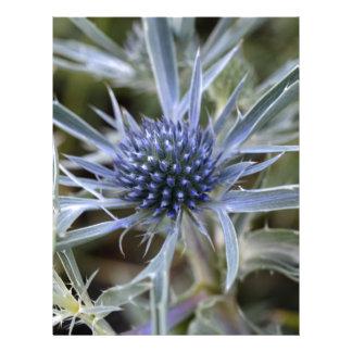 Eryngo Amethyst (amethystinum del Eryngium) Plantilla De Membrete