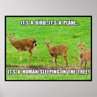 Es el dormir humano en el árbol posters