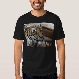 ¿Es este mi buen lado…? Camisas