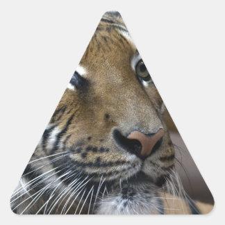 ¿Es este mi buen lado…? Pegatina Triangular