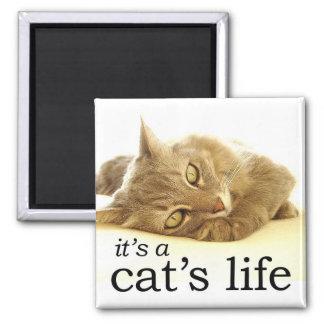 Es la vida de un gato - imán