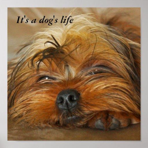 Es la vida de un perro póster