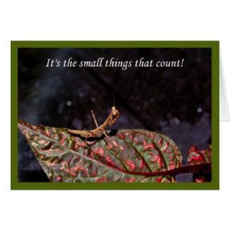 Es las pequeñas cosas que cuentan. mantis tarjeta de felicitación