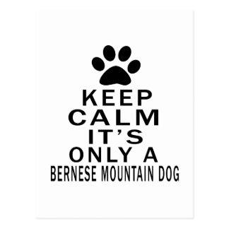 Es solamente un perro de montaña de Bernese Postal