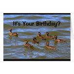 ¿Es su cumpleaños? ¡Pozo que es apenas Ducky! Tarjeta De Felicitación