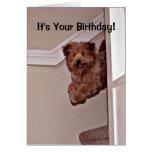 Es su mascota feliz emocionado cumpleaños del perr tarjetas
