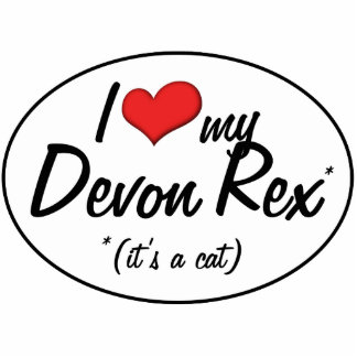 ¡Es un gato Amo a mi Devon Rex Escultura Fotografica