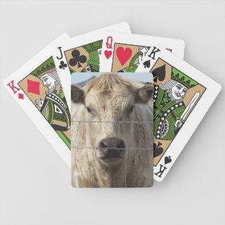 Es una cara de Charolais del ganado del rodeo occi Barajas De Cartas