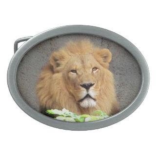 ¿Es usted león? Hebillas De Cinturón Ovales