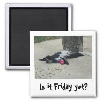 ¿Es viernes todavía? Imán divertido del mono
