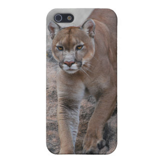 Escalada del león de montaña iPhone 5 fundas