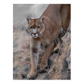 Escalada del león de montaña postales