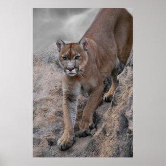Escalada del león de montaña póster