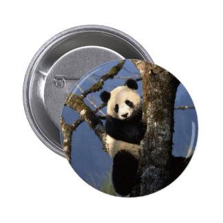 Escalador de la panda pins